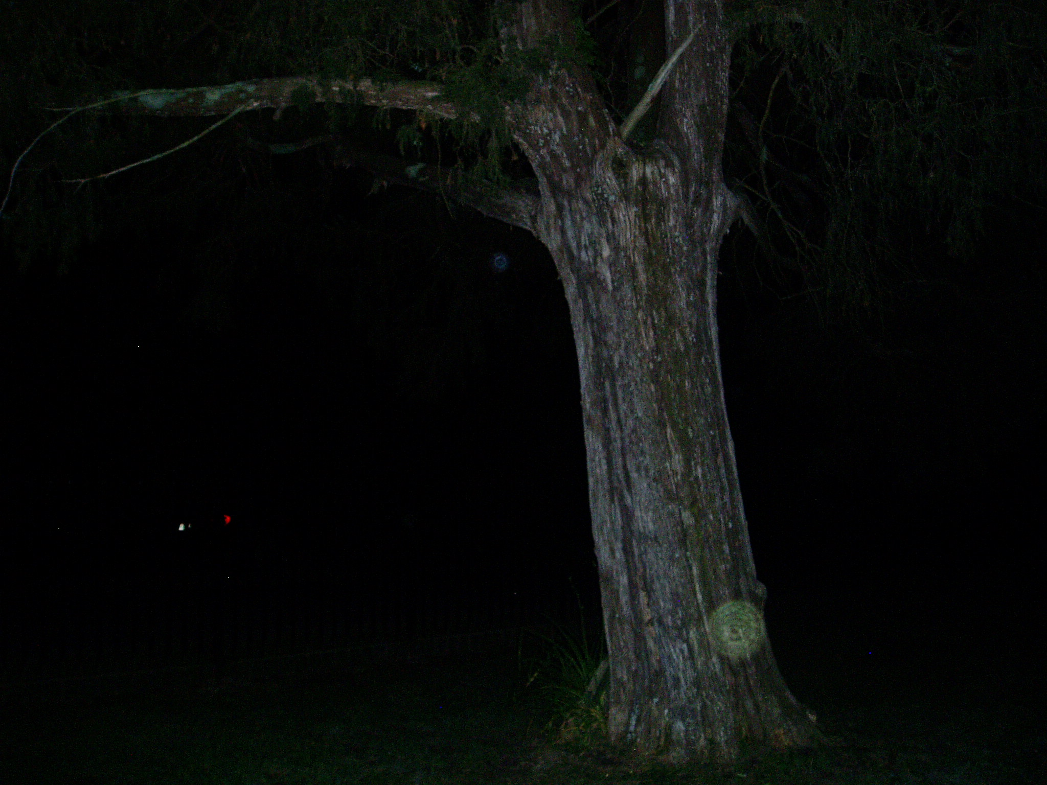 Yellow orb in front of tree